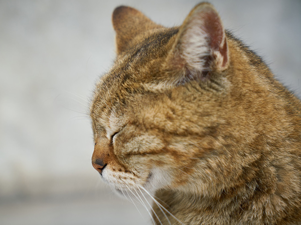 老猫がご飯を食べない 高齢期は仕方ないの 犬猫の専門家に無料