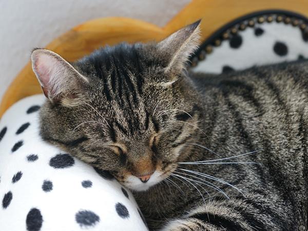 猫が病気でエサを食べない場合