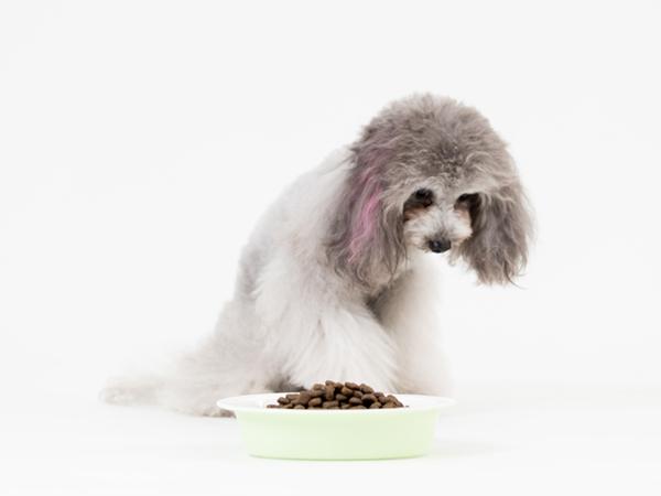 犬がご飯を食べない