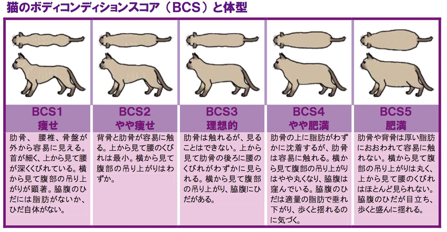 猫のボディコンディションスコア