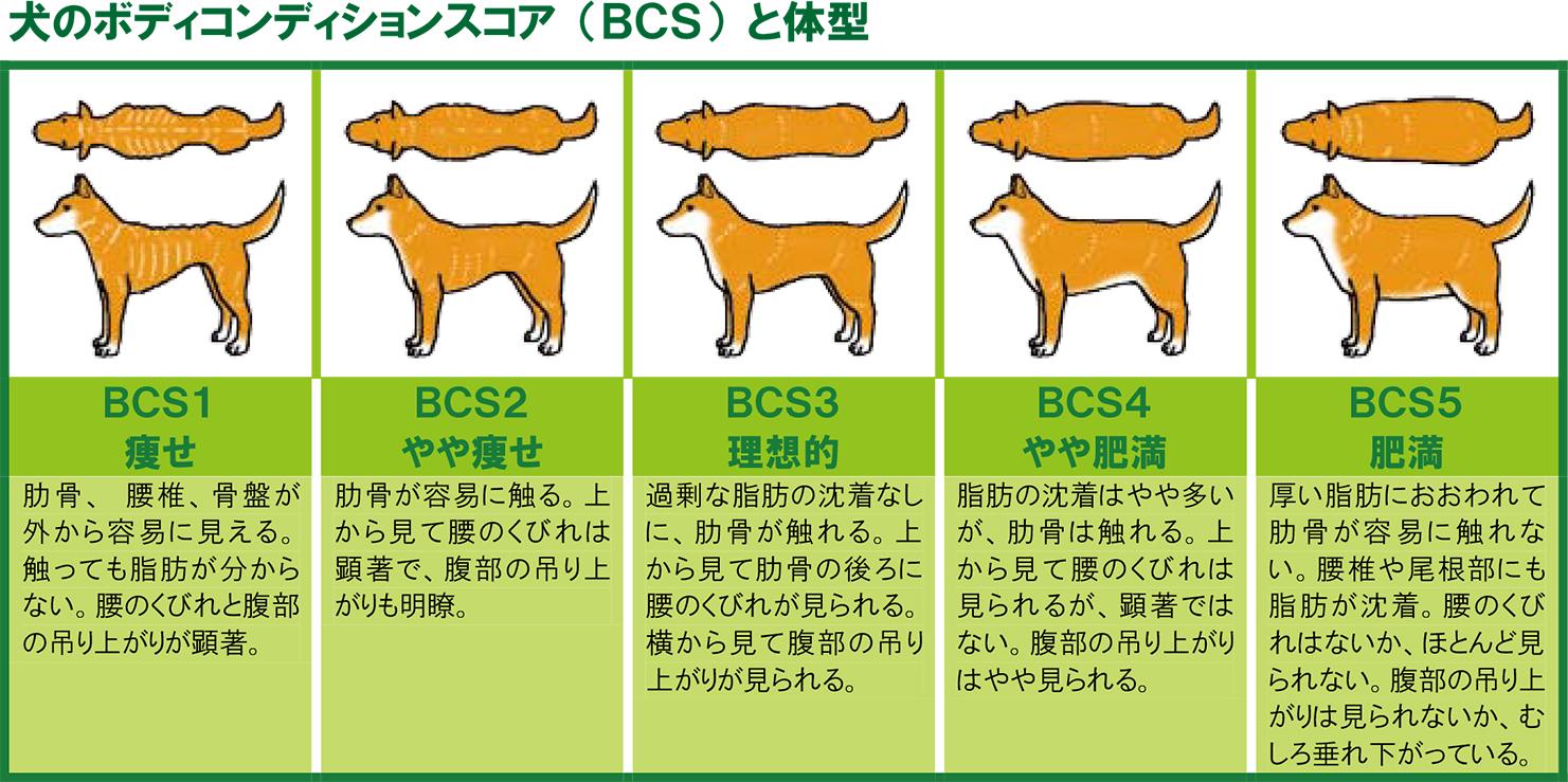 犬のボディコンディションスコア