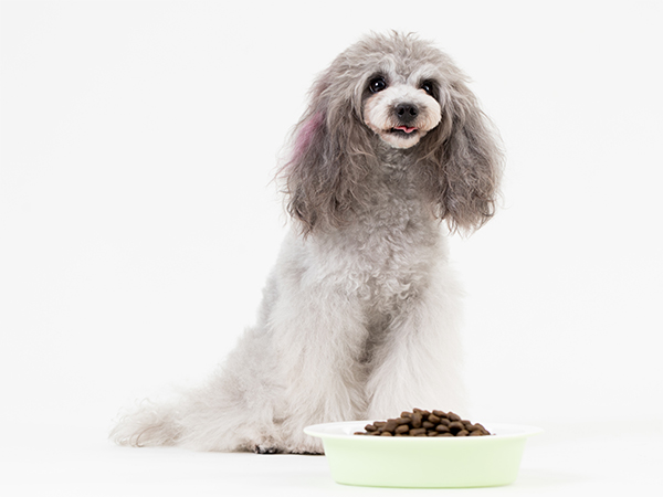 犬のストルバイト結石予防フードにはどんなものがあるの?